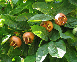 Screen Shot 2013 11 12 at 7.46.06 PM Medlars